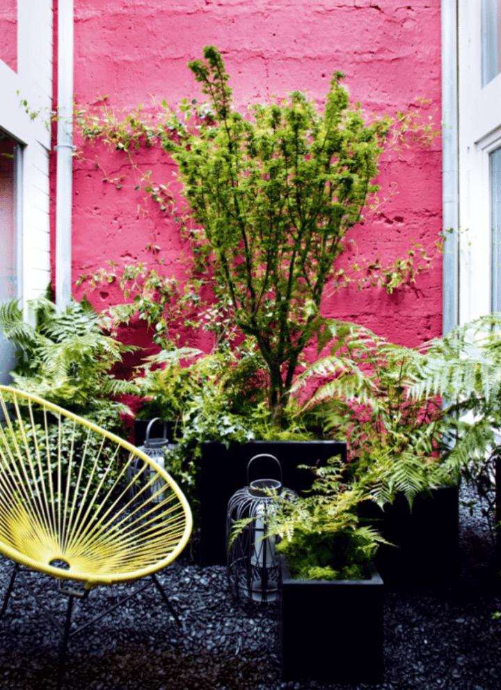 bright colours in gardens