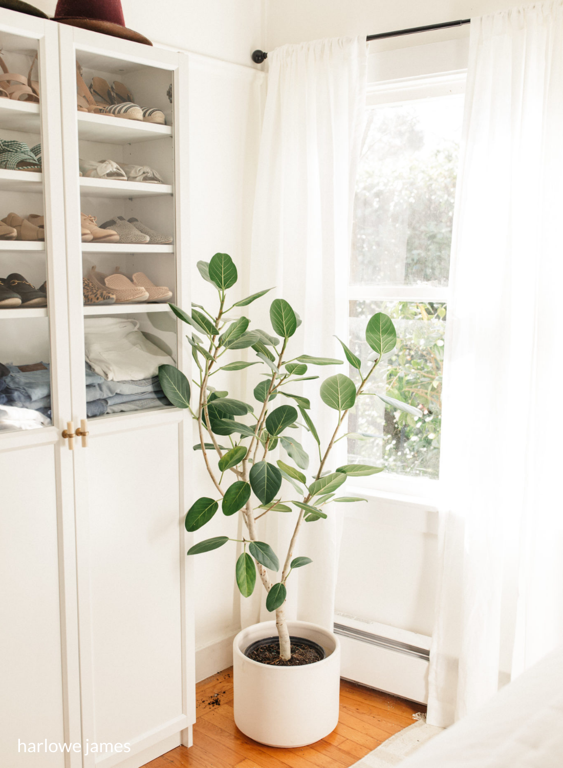 indoor greenery olive tree plant in dressing room